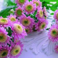 beautiful-pink-flowers-770x481