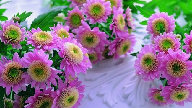 beautiful-pink-flowers-770x481